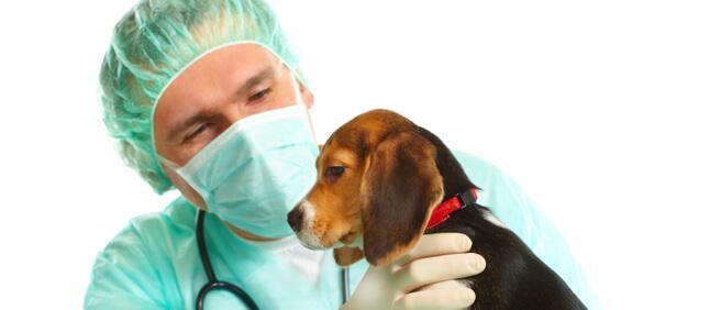 sunland amp tujunga ca area veterinary surgery pet medical